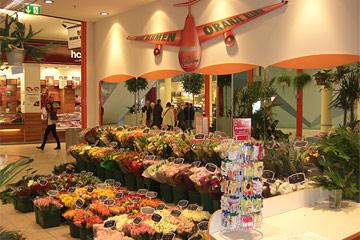 Oranje Blumen Frische Holland Blumen F R Den Rhein